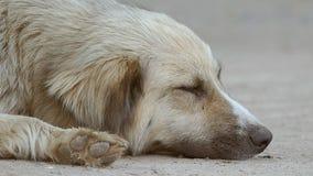 De hondsnuit is langzame geanimeerde video ter plaatse stock video