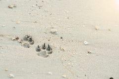 De hondvoetafdruk op het strand stock foto