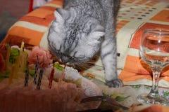 De hongerige grijze gestreepte gestreepte kat gestreepte kat eet cake, de verjaardag van het dier De aanwinst van het conceptenge stock foto's