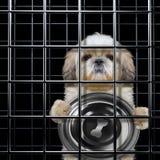 De hongerige hond is punishe in kooi royalty-vrije stock foto's