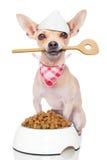 De hongerige hond van de chef-kokkok Stock Foto's