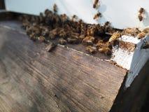 De Honing van de bijenbijenkorf Royalty-vrije Stock Foto's