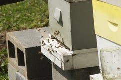 De honingbijen gaan en gaan de Bijenkorf in weg Stock Fotografie