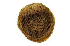 De honingraat isoleert witte achtergrond Stock Afbeeldingen