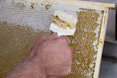 De honingraat zal voor oogsthoning openen stock foto