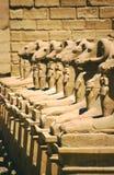 De hoofden van de de tempelram van Luxor, Egypte stock foto
