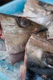 De Hoofden van vissen Stock Afbeelding