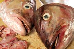 De hoofden van vissen Stock Afbeeldingen