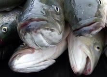 De hoofden van vissen Stock Foto