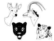 De hoofden van wilde dieren royalty-vrije illustratie