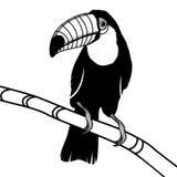De hoofdillustratie van de toekanvogel voor t-shirt Stock Afbeeldingen