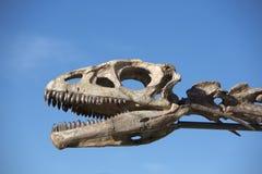 De hoofdschedel van de dinosaurus en blauwe hemel, Ischigualasto stock fotografie
