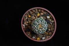 De hoogste mening van de cactus Royalty-vrije Stock Fotografie