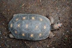 De hoogste mening van de schildpad royalty-vrije stock foto