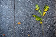 De hoogste mening van de tak met groene en gele bladeren valt op zwarte tegelsvoetganger voor achtergrond stock foto's