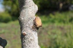 De hoogte van de behandelingstuin van de wond op de boom stock fotografie