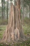 De hoop van de termiet Royalty-vrije Stock Foto's