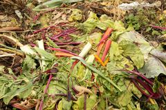 De Hoop van het compost Stock Fotografie