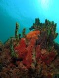 De Hoop van het koraal Royalty-vrije Stock Afbeeldingen