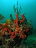 De Hoop van het koraal Royalty-vrije Stock Fotografie