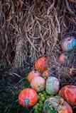 De hoop van pompoen en de groene appelen met graan drogen stro Stock Foto's