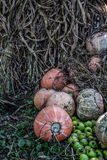 De hoop van pompoen en de groene appelen met graan drogen stro Royalty-vrije Stock Foto's