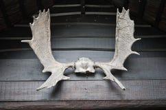 De Hoorn van Amerikaanse elanden op de muur Royalty-vrije Stock Afbeelding