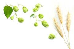 De Hopkegels van bierbrouweningrediënten en tarweoren op een witte achtergrond worden geïsoleerd die Het concept van de bierbrouw Stock Foto's