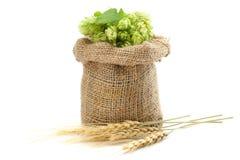 De Hopkegels van bierbrouweningrediënten in zak en tarweoren op witte achtergrond worden geïsoleerd die Het concept van de bierbr Stock Foto