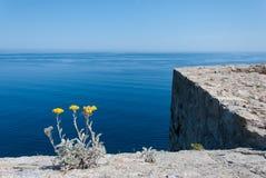 De horizon van Calvi stock foto's
