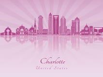 De horizon van Charlotte in purpere stralende orchidee Stock Fotografie