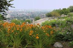 De horizon van Hamilton, Canada met bloemen in voorgrond stock foto