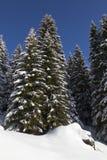 De horizon van het dennenbos, met sparren die door sneeuw worden behandeld. Royalty-vrije Stock Foto