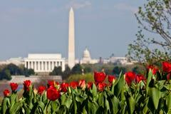 De Horizon van het Washington DC met Tulpen Stock Foto's