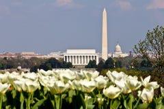 De Horizon van het Washington DC met Tulpen Stock Afbeeldingen