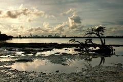 De Horizon van Miami Frame door Mangrove en de Pool van het Getijde Stock Foto's