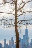 De Horizon van New York achter een Naakte Boom royalty-vrije stock fotografie
