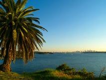De horizon van Sydney met palmtree Stock Afbeelding