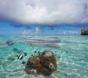 De horizonanemoon en vissen van de zeegezichtwolk onderwater royalty-vrije stock foto's