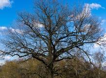 De horizontale dramatische achtergrond van de boomkroon Stock Foto's