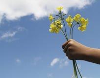 (De horizontale) gift van de bloem stock afbeeldingen