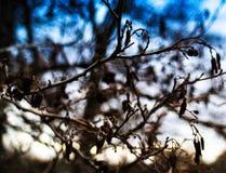De horizontale levendige de herfstboom vertakt zich bokeh Stock Foto's