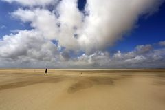 DE Hors op Texel, Nederland stock afbeeldingen