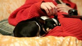 De houdende van maitresse streelt de oren van haar huisdier Het kleine puppy verwarmt zich op couchsleeps, die zijn neus duwen in stock footage