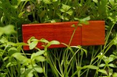 De houten aandrijving van de usbflits op het gras (selderie) Stock Foto's