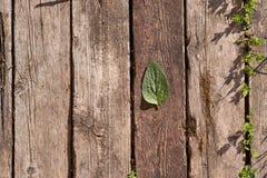 De houten achtergrond bestaat uit oude houten planken Het groene blad ligt op de raad stock afbeeldingen