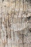 De houten achtergrond van de boomtextuur Stock Foto's