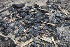 De houten as blijft van Comp-brandnacht het houten branden royalty-vrije stock afbeeldingen