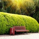 De houten bank op de achtergrond maakte altijdgroene struik in een openbaar park in orde zomer Het Concept van het landschapsontw stock foto's