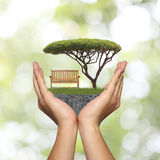 De houten bank op groen gras en heeft boom op mensenhand Royalty-vrije Stock Afbeelding